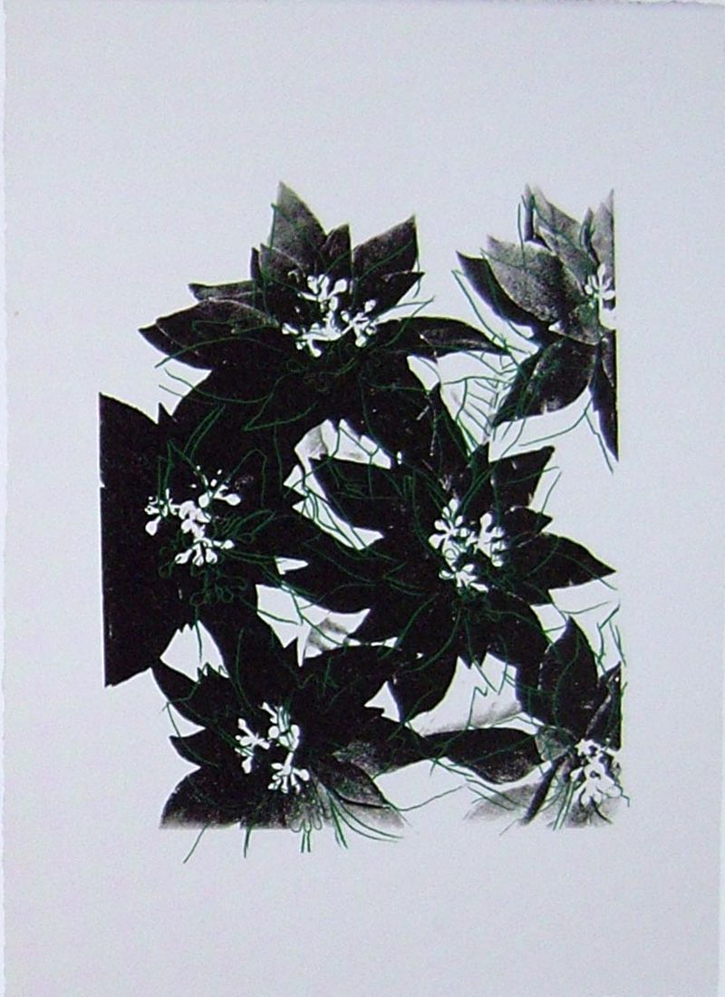 Poinsettias, UP39.17