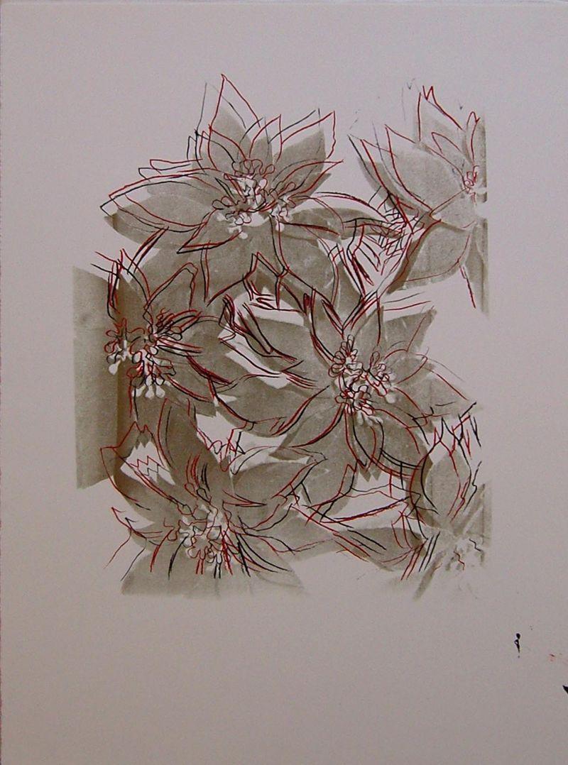 Poinsettias, UP 39.24